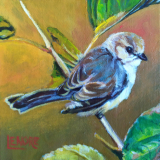 """Tiny Bushtit. From a photo by Ken Thorne. 6x6"""""""