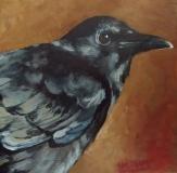 "Crow. 6x6""."