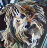 "Eddie, a commission of a Havanese. 20x20""."