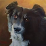 "Kobe. Commission of an Australian shepherd. 20x20""."