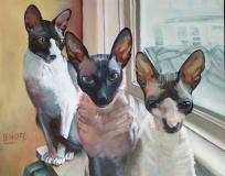 three-Cornish-Rex-cats-final